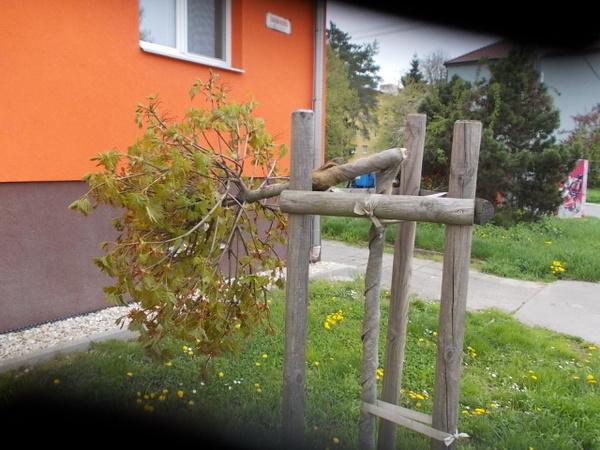 Polámané stromky v ul. Šafaříkova