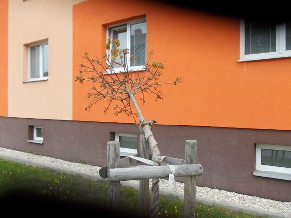 Polámané stromky v ul. Šafaříkova 2
