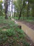 Zavodňování Kněžpolského lesa 3